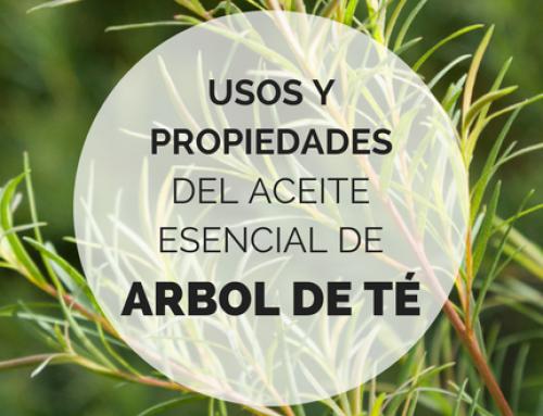 Aceite esencial de Árbol de té: Propiedades y usos